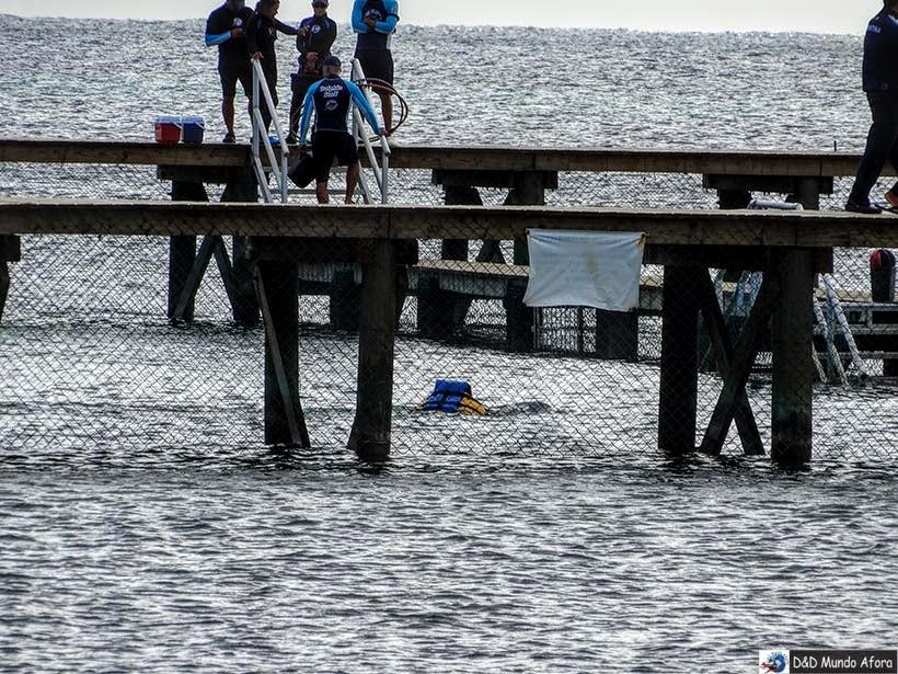 Onde nadar com golfinhos em Cancun - Moon Palace