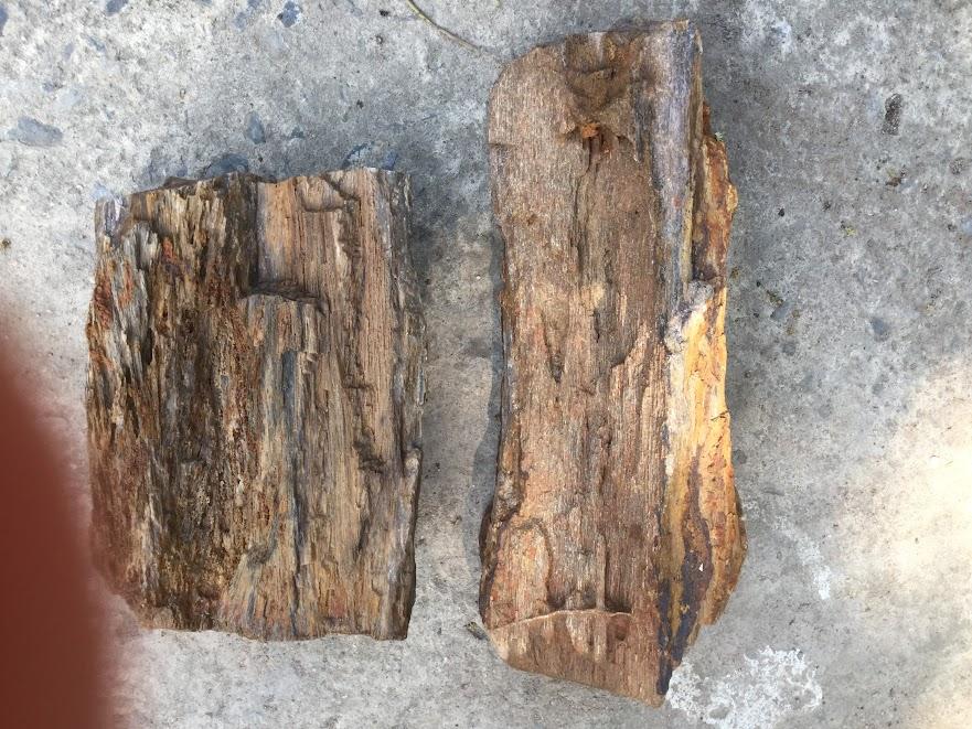 đá gỗ hóa thạch, một loại đá rất đẹp để trang trí hồ thủy sinh