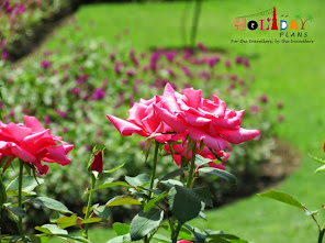 Flowers at Nishat bagh