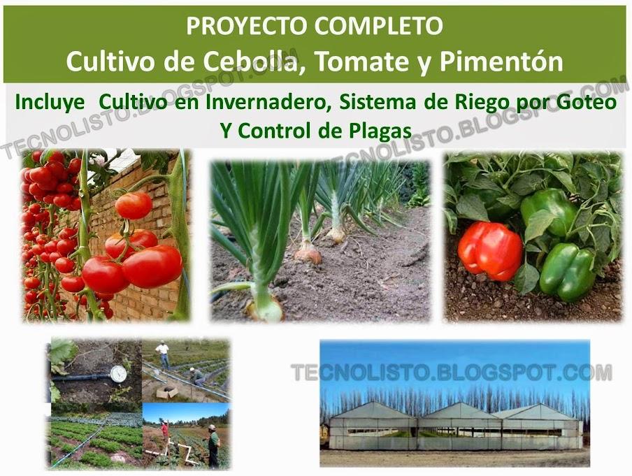 """""""Manual de Cultivo Siembra Cebolla, Pimentón y Tomate"""""""